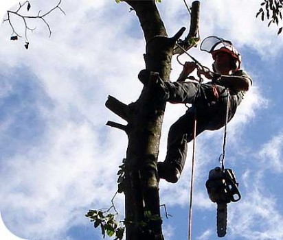 Devon Tree and Landscaping Services